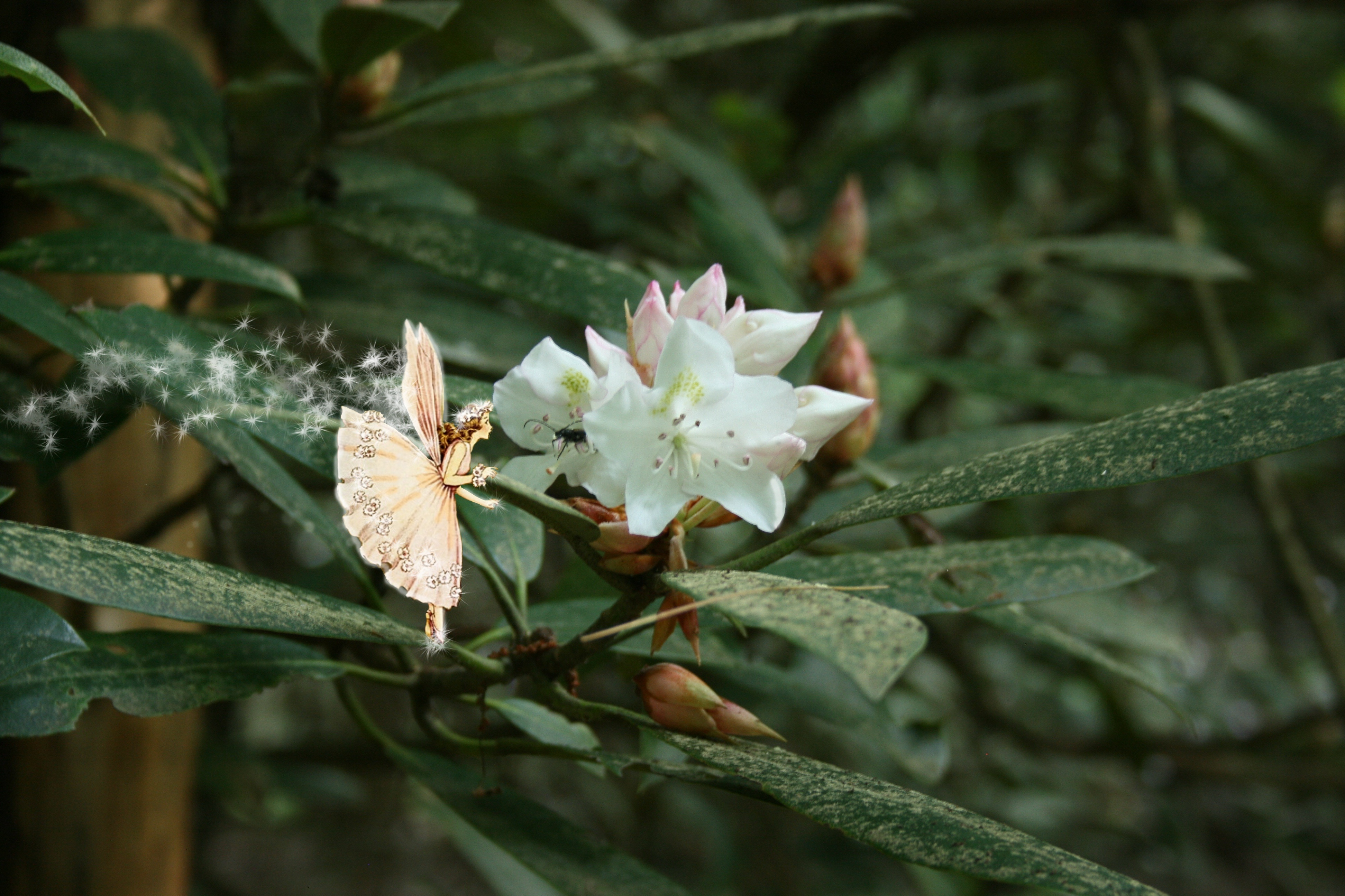 Elfe Fee Blumen Natur